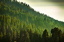 Timberlands Preservation